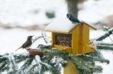 Час «запросити» пташок до свого саду та вікна: тернополянам - про зимове «меню» для пернатих