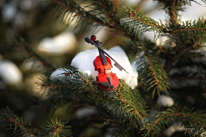 Різдвяна симфонія у ранковому поїзді
