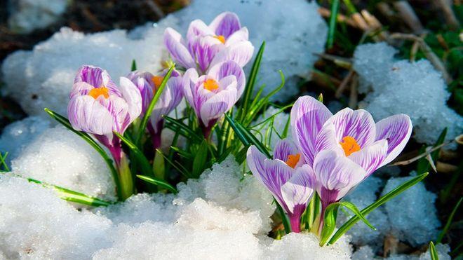 26 лютого – яке сьогодні свято, прикмети та іменинники, що не можна робити