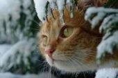 Зима попрощається холодом та мокрим снігом