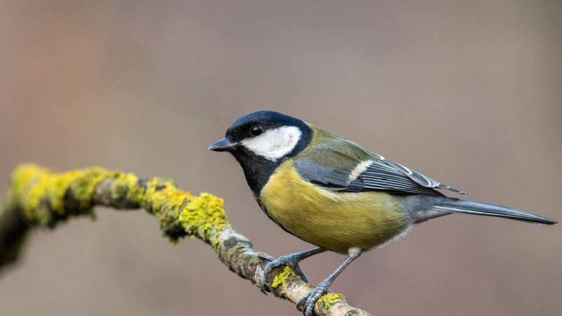 Браконьєри вивозять співочих птахів з України: обсяги контрабанди вражають