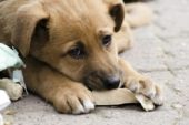 Як на Шумщині вирішують проблеми з безпритульними тваринами