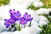 8 березня - яке сьогодні свято, прикмети та іменинники, що не можна робити
