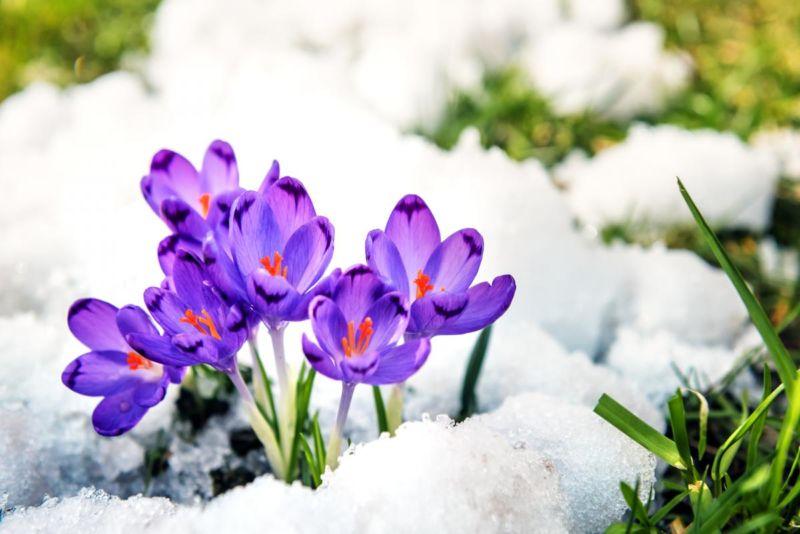 8 березня – яке сьогодні свято, прикмети та іменинники, що не можна робити