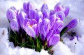 Поцілунки Березня й Весни сходять первоцвітами