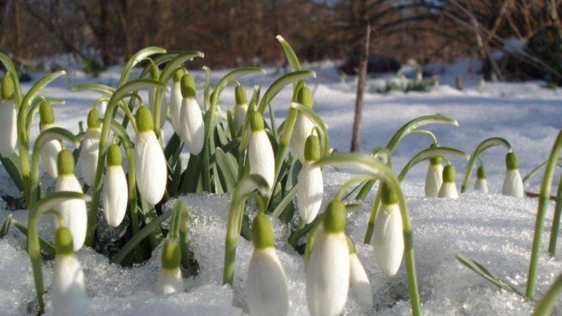 Яку погоду очікувати на Тернопільщині в перший день весни
