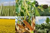 Сільськогосподарська продукція: ставку ПДВ з 1 березня зменшено