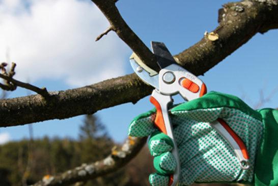 Обрізаємо дерева правильно: корисні поради для садівників-початківців