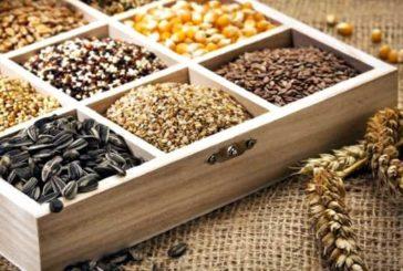 Замочувати чи пророщувати: що робити з насінням?
