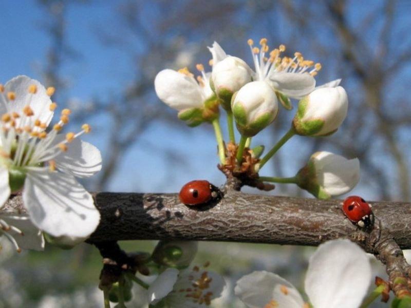 23 квітня – яке сьогодні свято, чим день увійшов в історію, прикмети та заборони