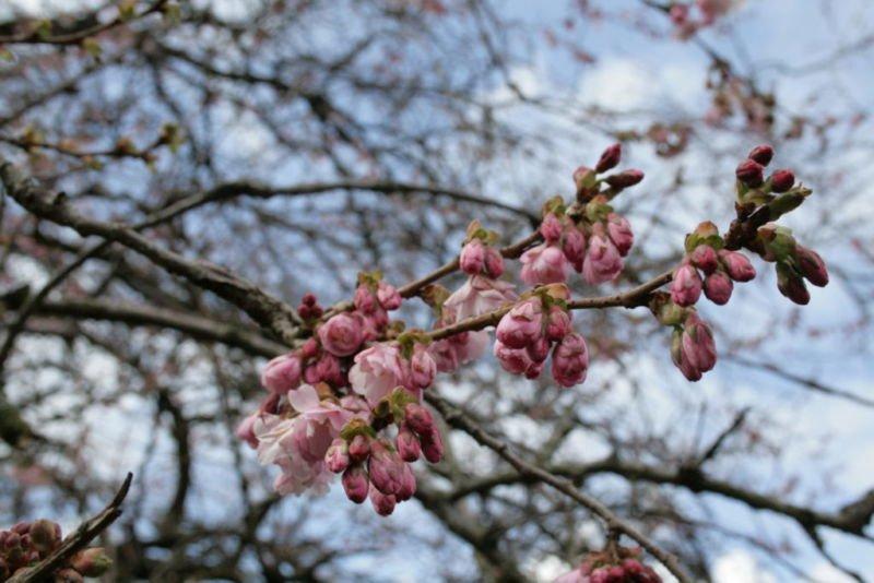 18 квітня – яке сьогодні свято, чим день увійшов в історію, прикмети та заборони