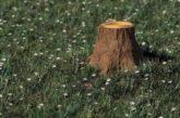 Біля Тернополя чоловік незаконно вирубував дерева: нарахували 43 пеньки