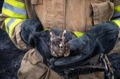 Ледь не згоріло живцем: на Тернопільщині вогнеборці врятували зайченя і просять не спалювати суху траву