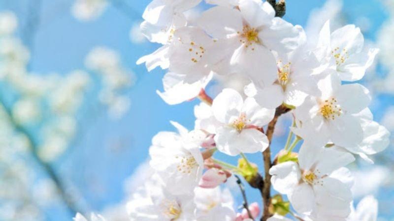 8 квітня – яке сьогодні свято, чим день увійшов в історію, що не можна робити