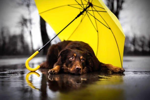 Не ховайте парасольки: на Тернопільщині в суботу дощитиме
