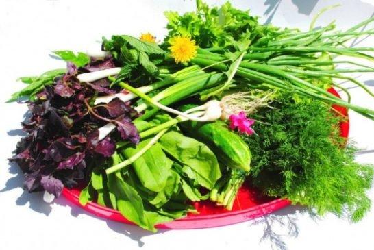 Вітаміни, що ростуть під ногами. Яка весняна зелень є найкориснішою