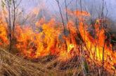 На Шумщині підпалили суху траву: вогонь перекинувся на ліс