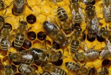 На Тернопільщині 80-річну бабусю-пасічницю покусали бджоли