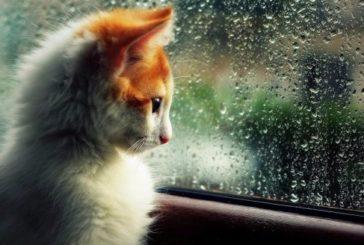 Субота на Тернопільщині буде теплою, але подекуди може скропити дощем