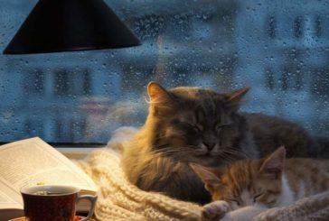Одягайтесь тепліше і не забудьте парасольки: на Тернопільщині в понеділок холодно та мокро