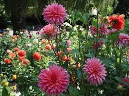Мій перший каштан і мамині квіти