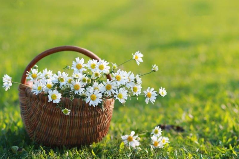 Неділя на Тернопільщині буде сонячною і теплою