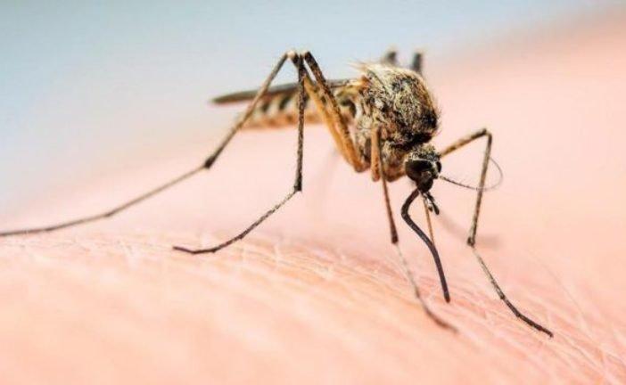 Обережно, комарі: що приваблює цих комах, як їх відлякати та чим обробляти місця укусів