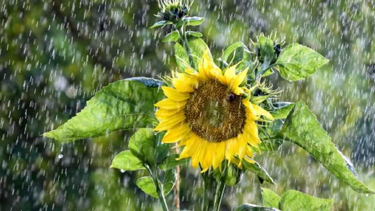 На Тернопільщині сьогодні може бути дощ і триматиметься прохолода