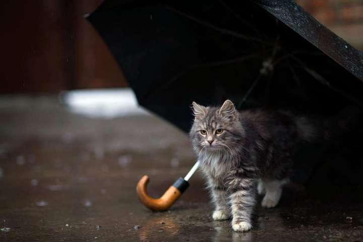 Не забудьте парасольки: на Тернопільщині сьогодні може дощити