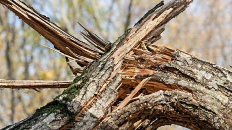 Дерево смертельно травмувало молодого жителя Тернопільщини