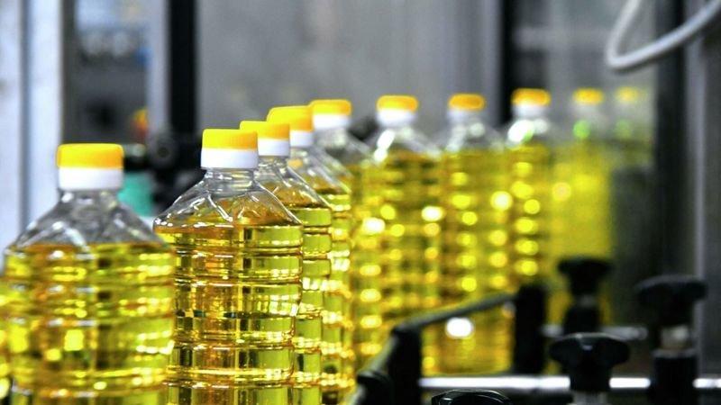 Олія не подешевшає: шкідники зіпсували половину врожаю соняшників