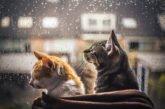 Хмарно, холодно, дощ - погодний «коктейль» на сьогодні