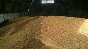 Понад тисяча тонн сої зникла із складу на Кременеччині