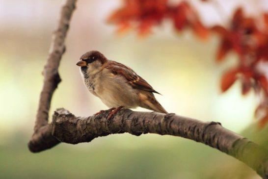 23 жовтня: яке сьогодні свято, прикмети, що не можна робити