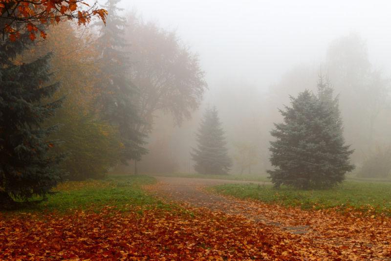 Тернопільщину заволоче туманом
